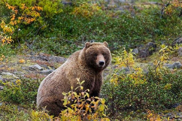 Hoe manifesteer je een idee – zelfs met beren op je pad?